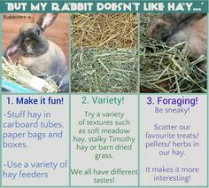 Try variety hays to your bunny. If still doesn't work, you might need to  check on their teeth, is it normal teeth? Or any significant hidden of sickness?