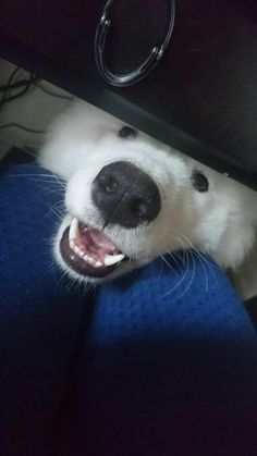 22 Animals Smiling Will Get You Through The Toughest Times  AWW