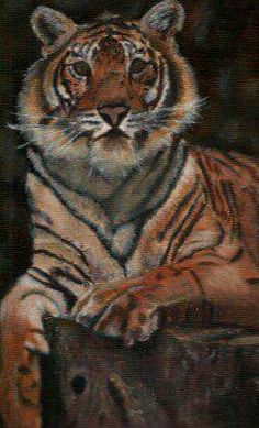 Picture of a Tiger that I painted