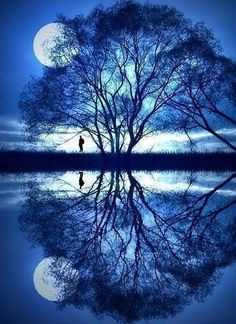 Tree and moon reflection. Beautiful!