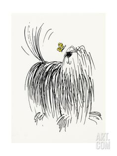 Shaggy Dog with Butterfly Stretched Canvas Print at Art.com