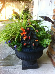 Dark plants need to be complimented by other plants with either bright flowers or leaves. Shade pot created by Pots With Pizzazz.