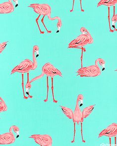 'Flamingos' by Mark Hordyszynski for Michael Miller Fabrics....would make a great summer lap quilt!