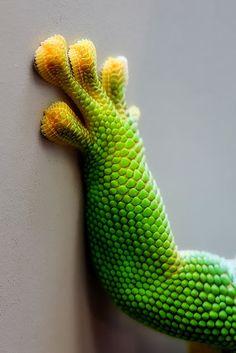 Lizard Leg    a1pictures.blogspot.com