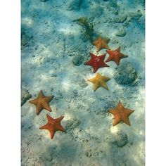 My Best Photos Underwater stars ❤ liked on Polyvore featuring backgrounds, mermaid, photos, ocean and pics