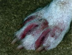 Hotspots (or hot spots) are localized skin infections on dogs. They can be extremely irritating to the animal, causing intense scratching, biting and licking of the affected area. Pet Relocation, Dog Hot Spots, Pet Shipping, Pet Transport, Animal Treatment, Pet Allergies, Pet Travel, Dog Boarding