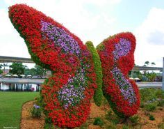First Butterfly Garden in #Dubai Miracle Garden will Open for Visitors in 30-45 Days with 45 Million Flowers