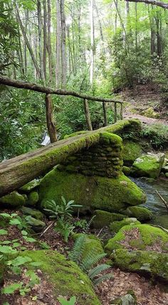 Foot bridge on a trail head in the Smoky Mtns. Beautiful Places, Beautiful Pictures, Shady Tree, Forest Path, Pathways, Mother Earth, Garden Bridge, Wonders Of The World, Countryside