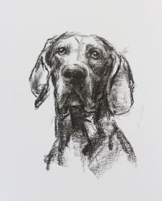 An original sketch drawing of a Weimaraner dog, charcoal on paper by dog artist Justine Osborne. Weimaraner, Vizsla, Oil Pastel Paintings, Dog Paintings, Animal Sketches, Dog Sketches, Dog Artist, Music Drawings, Charcoal Sketch
