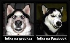 An overview of A Siberian Husky Dog & Its Character You Funny, Funny People, Hilarious, Funny Stuff, Funny Things, Awesome Stuff, Funny Shit, Funny Jokes, Photo Facebook
