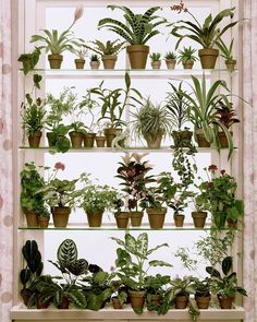 Room With Plants, House Plants Decor, Plant Rooms, Plants In The Home, Wall Of Plants, Best Plants For Bedroom, Window Plants, Potted Plants, Succulent Plants