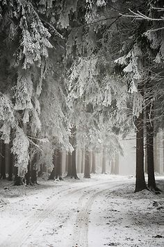 """'....He will not see me stopping here To watch his woods fill up with snow...."""" ~Robert Frost"""