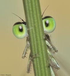 Esos ojos verdes by Tomas Polaino, via 500px