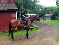 One of our interns, Kate, with Portia today. Educational Programs, Horses, Animals, Animales, Animaux, Animal, Animais, Horse