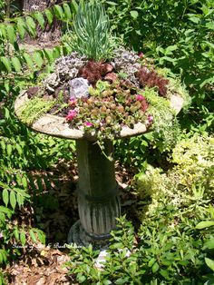 succulents in bird bath -I did something similar and it's beautiful. Makes a statement in the garden.