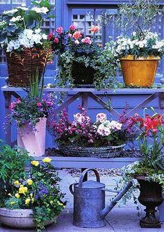 Coloured Garden