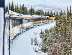 Alaska northern lights tours in the Arctic Circle & Fairbanks with Alaska Tours. Guiding northern lights and other Alaska adventure vacations since Alaska Northern Lights, Northern Lights Tours, See The Northern Lights, Alaska Winter, Alaska Train, Alaska Tours, Alaska Railroad, Alaska Adventures, Visit Alaska