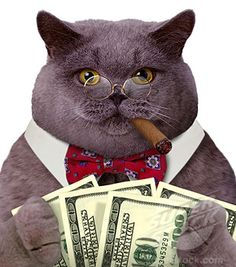 fat cat cigar - Balanced diet is essential to keeping your cat healthy, know how at Catsincare.com!