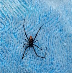 118 Best Spiders Images Spider Spider Bites Brown Recluse