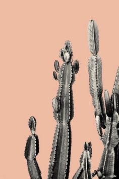 pink cactus friend Art Print urban jungle trend botanic trend cactus trend c Photo Wall Collage, Picture Wall, Cactus Poster, Wal Art, Black And White Aesthetic, Cactus Art, Aesthetic Pictures, Vintage Posters, Wall Art Prints