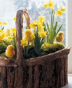 Love this basket of daffodils.#Repin By:Pinterest++ for iPad#