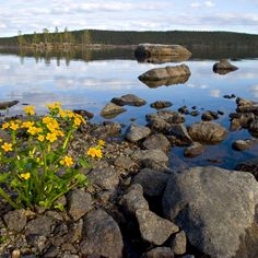 Lake Inarijärvi, Finland best of eurovelo routes Lapland Finland, Scenery Pictures, Scandinavian Countries, Lappland, Water Reflections, Go Camping, The Great Outdoors, Natural Beauty, Tourism