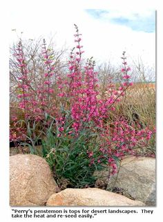 Desert Plants | Desert Plants for Landscaping