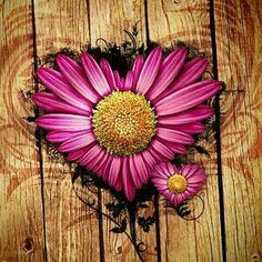 Pink Daisy Love wallpaper by im_mehta I Love Heart, Happy Heart, My Heart, Pink Sunflowers, Purple Flowers, Daisy Flowers, Wild Flowers, Backgrounds Wallpapers, Phone Wallpapers
