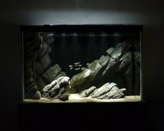fuck-yeah-aquascaping: A hardscape-only tank with custom styro background — perfect composition with the low light! I have a general distaste for artificial aquarium backgrounds, but this is a great one. This is how it was built. Cichlid Aquarium, Aquarium Aquascape, Aquarium Cichlidés, Coral Aquarium, Aquarium Terrarium, Aquarium Rocks, Nature Aquarium, Aquarium Design, Planted Aquarium
