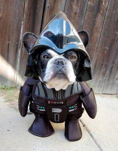 Luke, I Am Your…Dog…