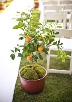 Potted-Fruit-Tree Aisle Markers Potted orange tree aisle marker PHOTO BY GABRIEL RYAN PHOTOGRAPHERS Arrangements of cut flowers are classic ceremony aisle décor, but consider using a fruit tree for a fresh (and aromatic) twist. 26 Prettiest Flower Ideas Ever (No, Really) | TheKnot.com