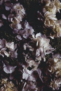 Wild Entanglements and Smoke Cake — Butter and Brioche Iphone Wallpaper App, Rose Wallpaper, Million Flowers, Drawing Sketches, Drawings, Aesthetic Backgrounds, Flower Fashion, Art Images, Flower Power