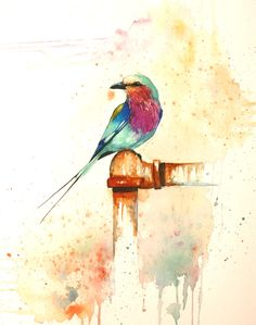 Beautiful Watercolor Bird Sketch by Filippa Levemark, Lilac Breasted Roller
