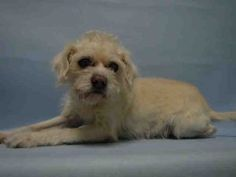"""SUPER URGENT 01/02/2017 Discarded due to """" No Time """" what they really meant was """" This dog is old and I want it killed for free .  FLASH – A1100889  MALE, TAN, JACK RUSS TERR MIX, 15 yrs OWNER SUR – EVALUATE, NO HOLD Reason NO TIME Intake condition EXAM REQ Intake Date 01/02/2017, From NY 11216, DueOut Date 01/02/2017, I came in with Group/Litter #K17-085492."""