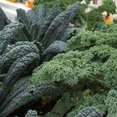 Grönkål – lättodlad och tålig odla!
