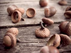 memories of the days with an acorn whistle in my pocket~ - More Great Ideas on CuriousCountryCreations.com