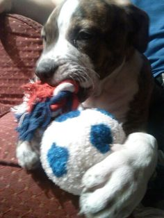 New toy from Grammy!