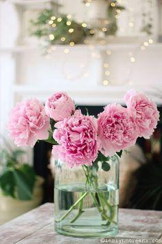 Candy Pink Peonies - The Villa on Mount Pleasant Beautiful Flower Arrangements, Fresh Flowers, Beautiful Flowers, Simple Flowers, Floral Arrangements, Peonies Bouquet, Pink Peonies, My Flower, Flower Power