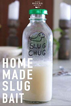 DIY Slug Bait. Because Beer is for Drinking Not Catching Ground Boogers. Ground Bird Feeder, Diy Bird Feeder, Humming Bird Feeders, Slugs In Garden, Garden Pests, Lawn And Garden, Garden Slug, Garden Tools, Brick Garden