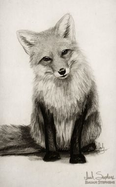 Fox Say What? by IsaiahStephens.deviantart.com on @DeviantArt