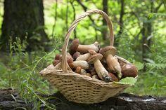 Gefahrlos Pilze sammeln – die wichtigsten Tipps | Frag Mutti