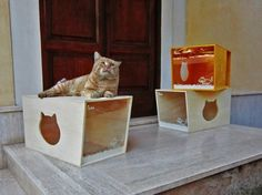 Qcha Is a Cozy and Sustainable Abode Designed Just for Cats