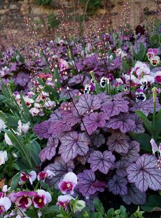 Heuchera with Viola for shade garden 😍 Planters For Shade, Shade Plants, Garden Planters, Balcony Garden, Pergola Garden, Corner Garden, Amazing Gardens, Beautiful Gardens, Beautiful Flowers