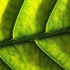 [2012.7.6] 볕이 드는 나뭇잎 S-X1    항상 평화로운 듯 보이는 나무와 잎사귀에는     사실 그 속에 매우 복잡하고 정교한 물질대사과정이 일어나지요.    평온과 안락을 위해서는 많은 노력이 필요하다는 것을 보여주는 것 같습니다.    <사진정보>    촬영 모드 - Aperture-Priority AUTO  감도- ISO 100  다이나믹 레인지 - 100%  조리개 - f/3.6  셔터스피드 - 1/12  초점거리 - 6.1mm  화이트 밸런스 - AUTO  필름 시뮬레이션 - PROVIA    http://blog.naver.com/fujifilm_x/150136706140