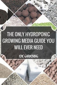 this guide, I'll give you a breakdown of the most popular types of hydroponic growing media.In this guide, I'll give you a breakdown of the most popular types of hydroponic growing media. Indoor Vegetable Gardening, Organic Gardening, Container Gardening, Gardening Tips, Texas Gardening, Flower Gardening, Fruit Garden, Hydroponic Farming, Hydroponic Growing