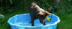 4. díl: Lotrando běžící, štěkající. Aneb co dělat, když vám štěně začne odrůstat...