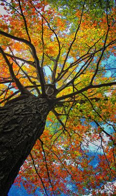 ✮ Autumn Tree against the sky.