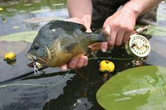 Best Panfish Flies - Fly Fisherman