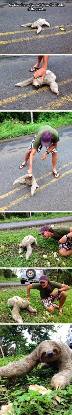 Funny pictures about Why Did The Sloth Cross The Road? Oh, and cool pics about Why Did The Sloth Cross The Road? Also, Why Did The Sloth Cross The Road? Animals And Pets, Baby Animals, Funny Animals, Cute Animals, Nature Animals, Wild Animals, Beautiful Creatures, Animals Beautiful, Amor Animal