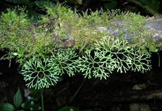 Ferns Garden, Terraria, Vivarium, Dusk, Orchids, Greenery, Plants, Image, Terrariums